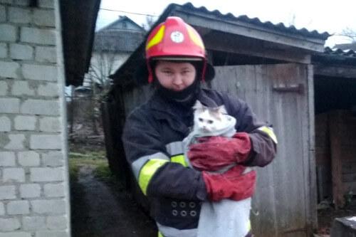 На Білогірщині рятувальники витягли кота з колодязя