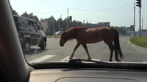 Нетішинський суд закрив справу про ДТП за участі коня