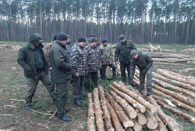 Шепетівський лісгосп виготовлятиме дров'яну деревину для виробництва целюлози