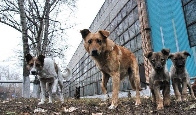 У Нетішині небайдужі рятують безпритульних собак
