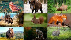 Облік тварин, Шепетівка, єгері