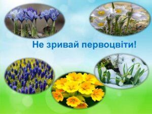 Первоцвіт, штраф, поліція, Шепетівка