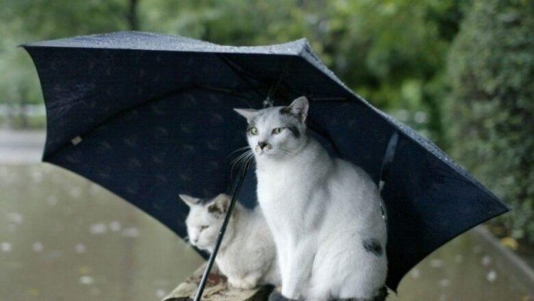 Коти_сховалися_під_парасолькою