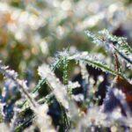 На вихідні у Шепетівському районі очікують заморозки