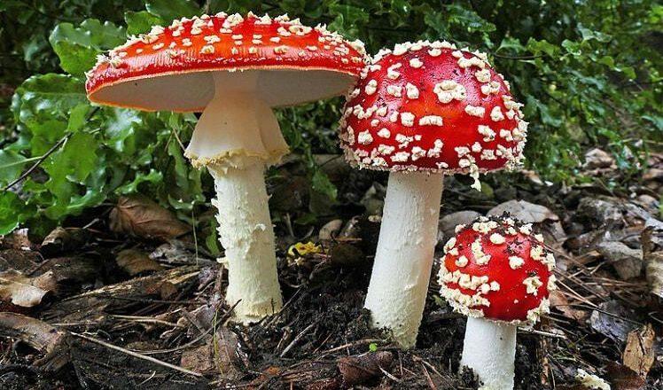 Їстівні та неїстівні: які гриби можна збирати весною в Шепетівському районі