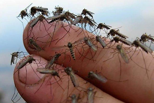 Чи буде нашестя комарів у Шепетівському районі влітку?