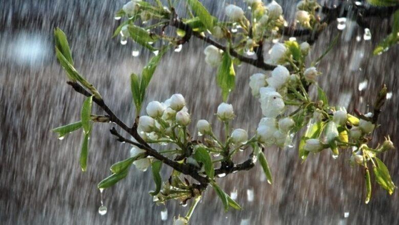 Якою буде погода у Шепетівському районі на Провідну неділю