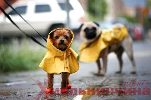 Холодні та дощові вихідні чекають на жителів Шепетівського району: де буде гроза?