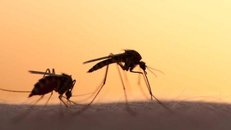 На Шепетівщині активізувались комарі. Чи переносять вони коронавірус?