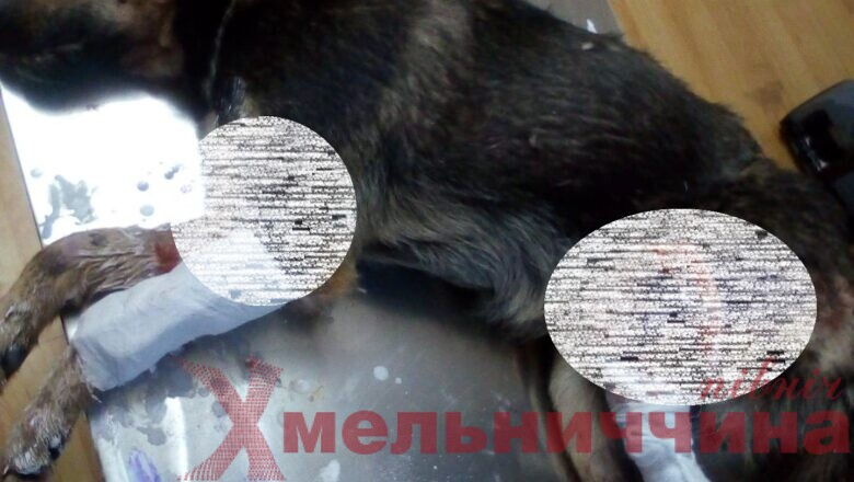 У Судилківській ТГ небайдужі врятували збитого на трасі пса