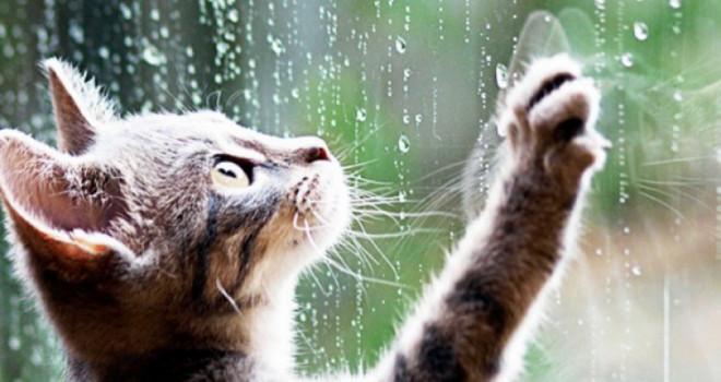 Чи брати на Великдень парасольку? Якою буде погода в Шепетівському районі на свята