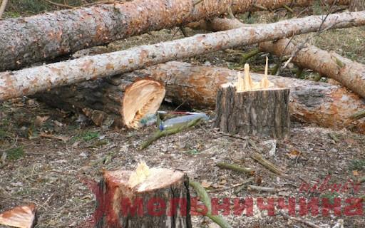 Не знайшли винних – стали крайніми: ямпільські лісівники сплатять штраф за незаконні вирубки