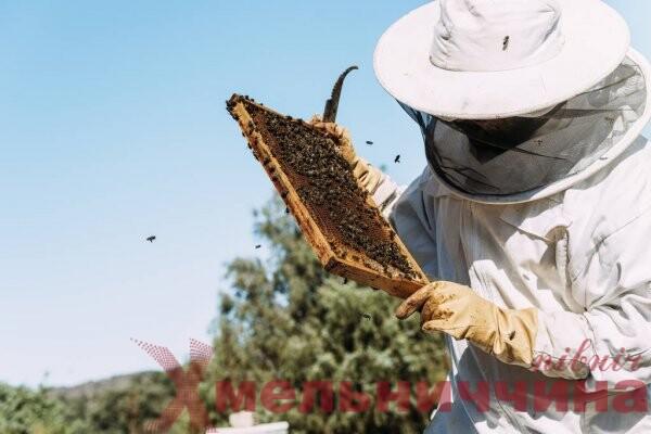 Як отримати до 60 тисяч гривень за розведення бджіл. Пояснюють у Білогірській ТГ