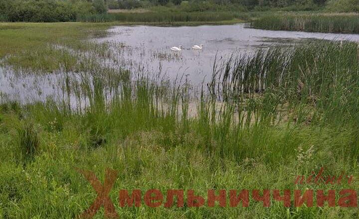 Розстріяли цілі сім'ї: на Хмельниччині у перший день «легального» полювання мисливці порушили закон