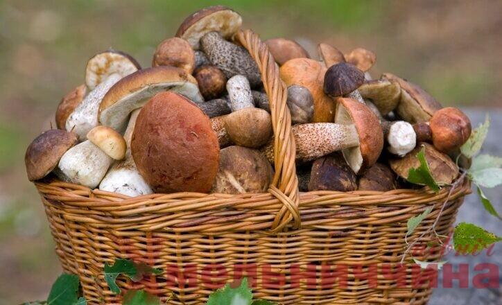 Знайомий пригостив грибами: у сусідньому із Шепетівським регіоні раптово померла родина