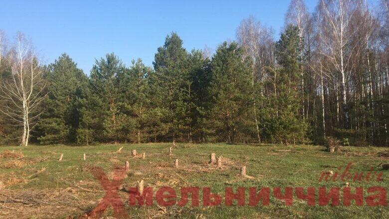 На Шепетівщині за незаконну вирубку дерев засудили співробітника парку