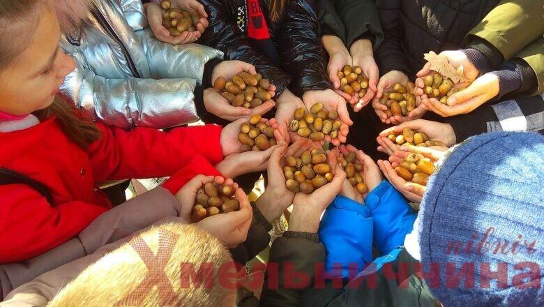 До лісу по жолуді: працівники НПП «Мале Полісся» розпочали збір лісового врожаю