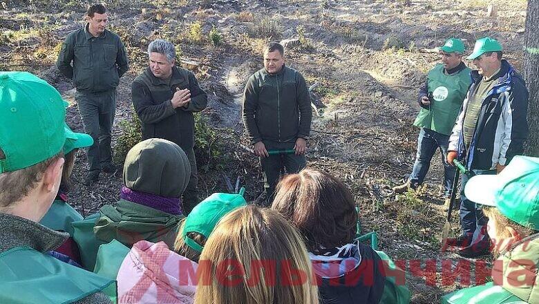 Висаджено понад 1000 саджанців модрини та ялини: в Ізяславському лісгоспі триває акція «Створюємо ліси разом»