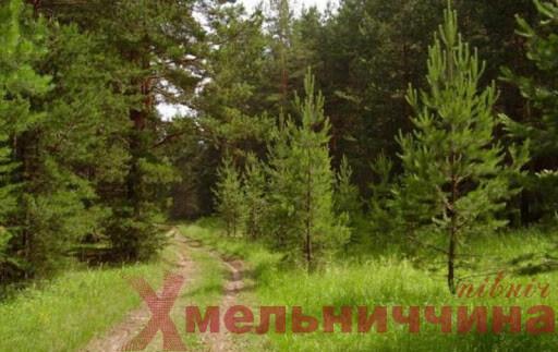 У лісі на Шепетівщині зник 10-річний хлопчик (оновлено)